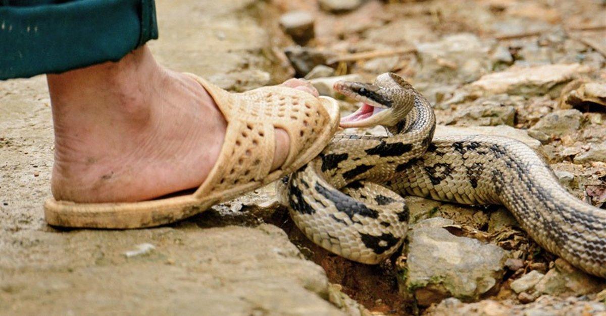 งูกำลังจะฉกเท้า
